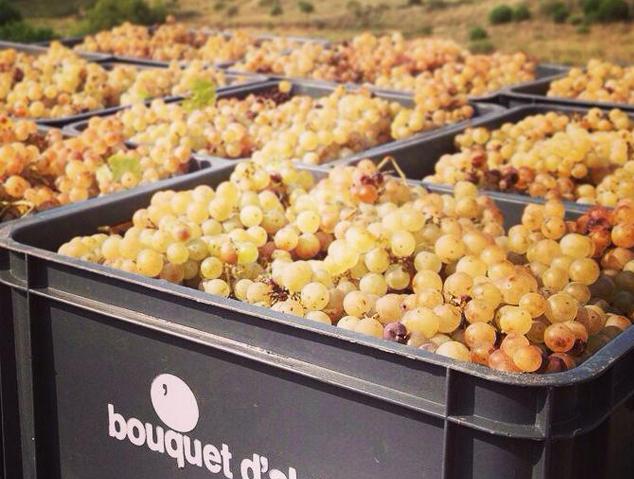 Raïm del Celler Bouquet d'Alella