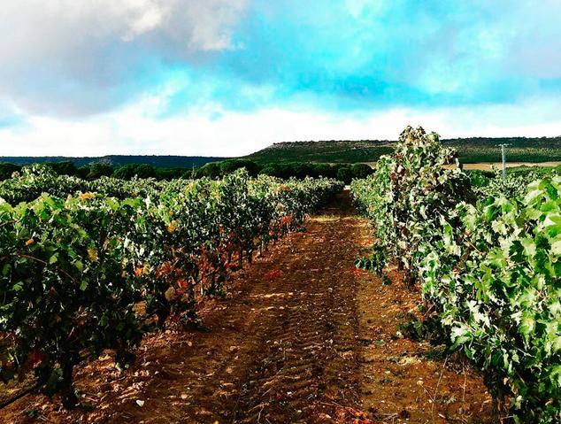 Vinyes Vega Sicilia
