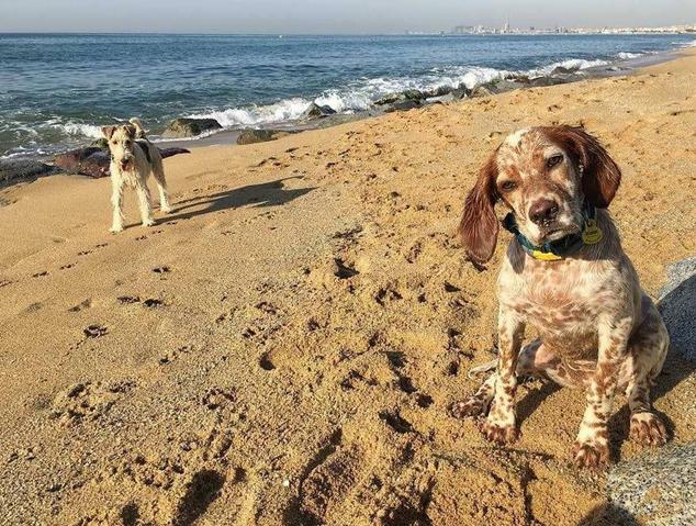 La platja per a gossos del Masnou
