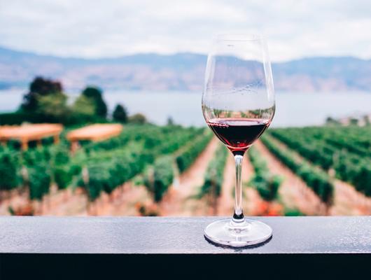 Els 10 millors vins catalans (que hem tastat) aquest 2020